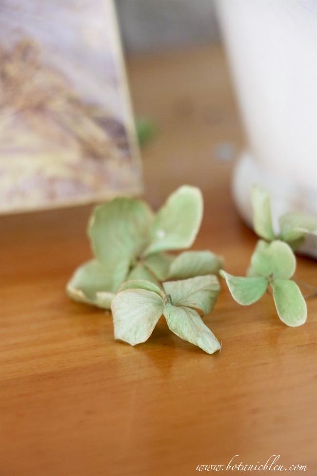dried-green-hydrangea-petals