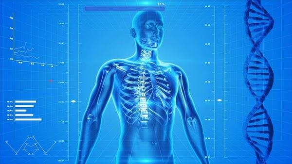 Cientificos crean software para mapear el cuerpo humano.