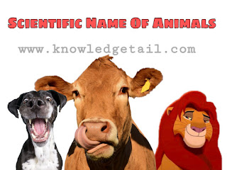 Scientific Name of Animals (www.knowledgetail.com)