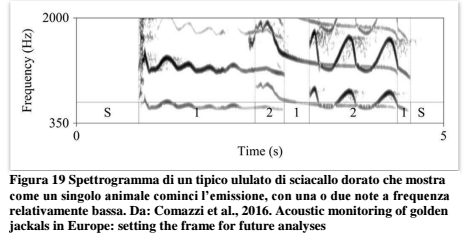 Master thesis in italy