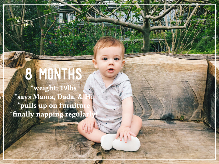 eight month baby photos update