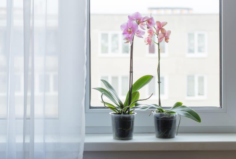 Dicas de plantas para decorar sua casa