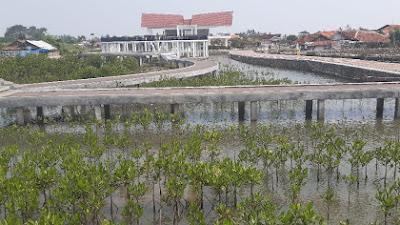 Peduli Lingkungan, Pemkab Tangerang Tanam Bibit Mangrove Di Desa Ketapang