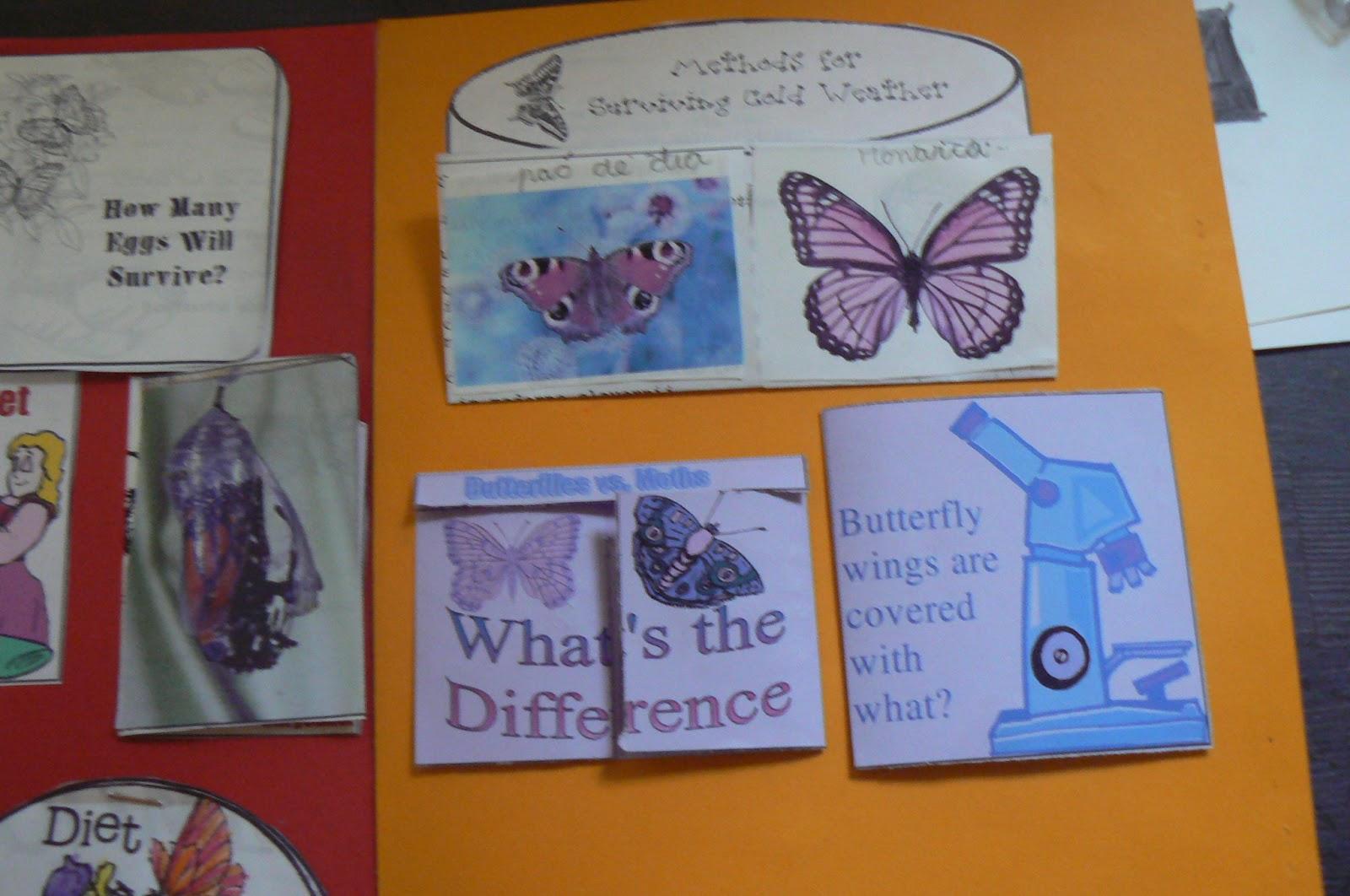 Orca Observar Recordar Crecer Y Aprender Libreta De Dibujo: Orca: Observar, Recordar, Crecer Y Aprender: Lapbook Mariposas