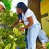 Inespre vende plátanos a peso