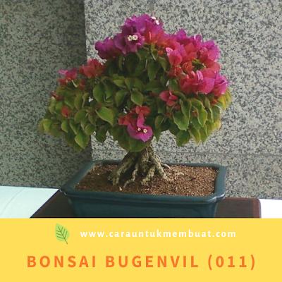 Bonsai Bugenvil (011)