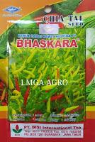 CARA MENANAM CABE BHASKARA, JUAL BENIH CABE BHASKARA, TANAMAN CABE BHASKARA, LMGA AGRO