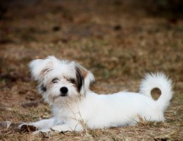Feel the Heat: 10 Potentially Hazardous Summer Hotspots for Pets