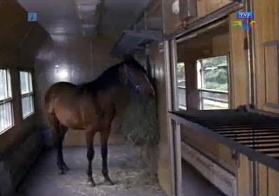 Przewóz konia w pociągu