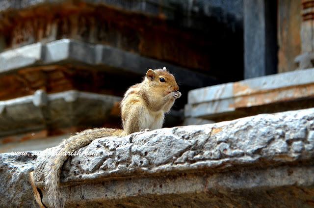 The Chipmunk Fort Of Karnataka 3
