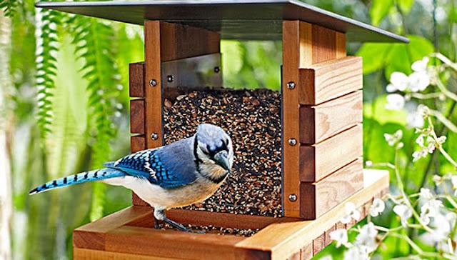 mangeoire-a-oiseaux