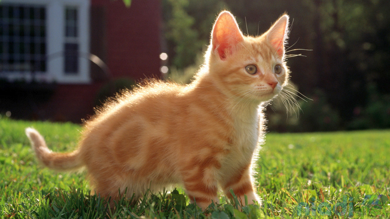 nama nama kucing jantan betina lucu yang bagus