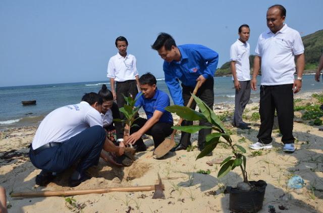 Thanh niên Lào trồng cây bàng vuông tại Chùa Hang trên đảo Lý Sơn