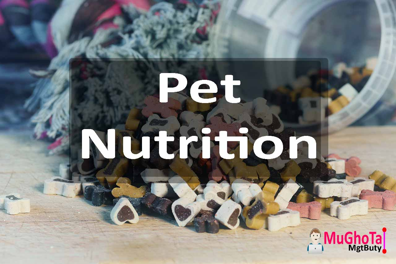 Pet Nutrition for a Balanced Diet