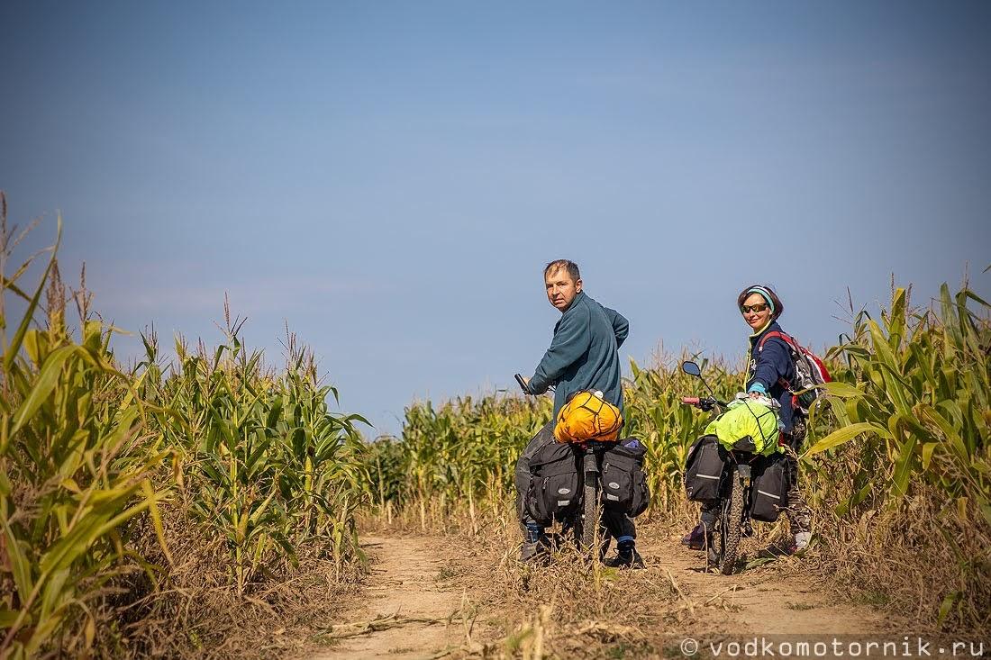 Дорога сквозь живописные кукурузные поля