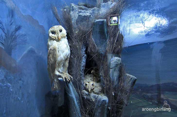 serak museum zoologi bogor