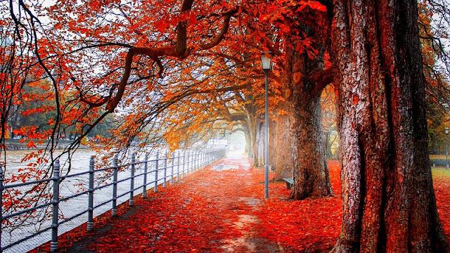 Descarga fondo de pantalla 4K paisaje otoño