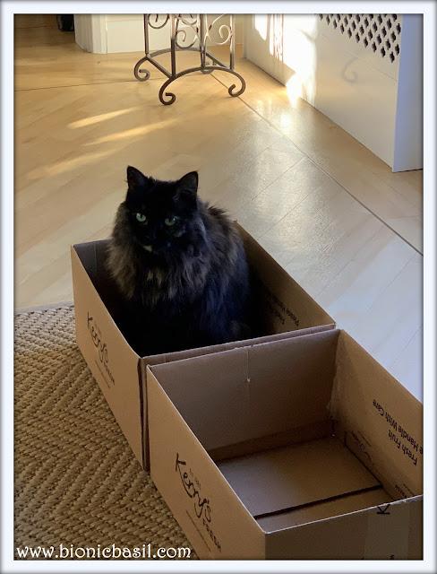 Pandora In A Box ©BionicBasil® The Pet Parade 390
