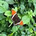 Con sus alas y colores, las mariposas cautivan el Jardín Botánico de Medellín