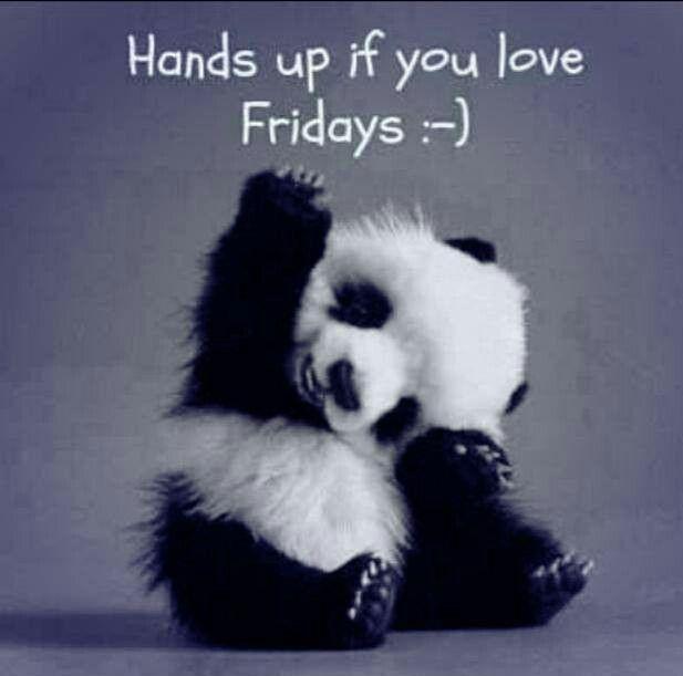 funny sleepy panda Friday quotes images