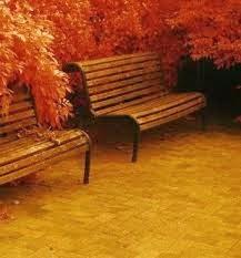 otoño para Cosas que siento