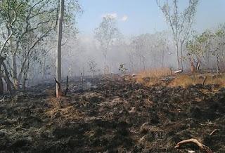 kebakaran hutan wisata sungai dumai
