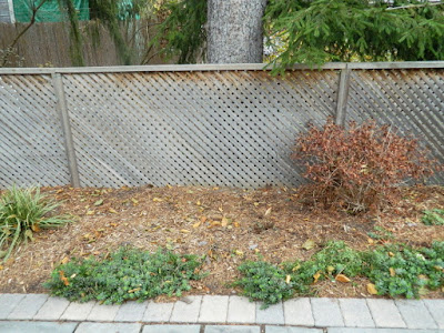 Oakwood Village Backyard Fall Cleanup after by Paul Jung Toronto Gardening Services