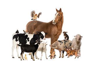 Hayvanlar ile İlgili Özlü Sözler ile ilgili aramalar hayvan sevgisi ile ilgili yazılar  hayvanlarla ilgili sözler köpek  hayvanlarla ilgili dini sözler  köpek sevgisi ile ilgili sözler  hayvan sevgisi ile ilgili sloganlar  hayvan sevgisi ile ilgili atasözleri  hayvana şiddetle ilgili sözler  einstein hayvanlarla ilgili sözler