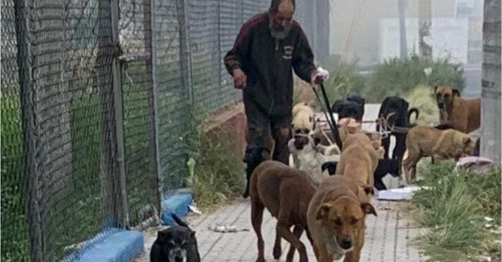 Recibe comida envenenada para alimentar a sus perros; mueren 17 de los 25 que cuidaba