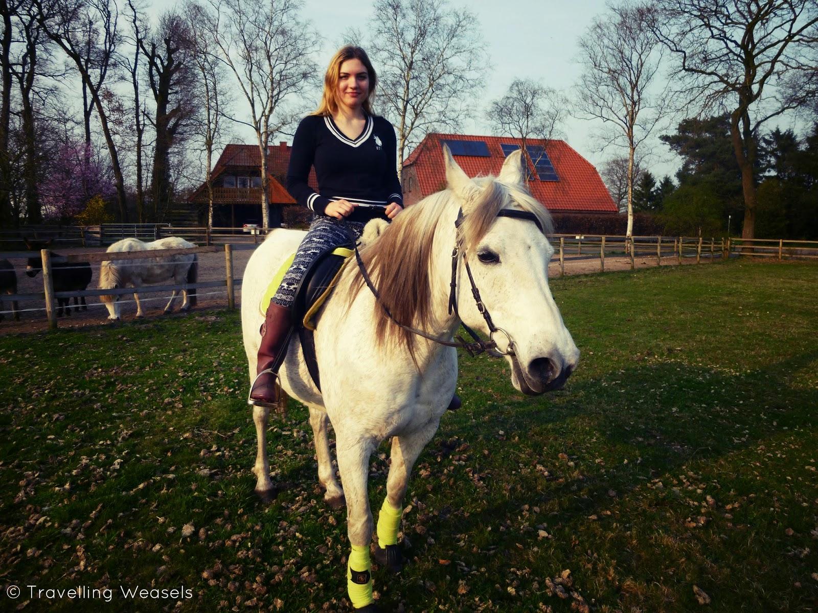 Pferd Niedersachsen