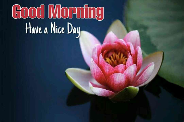Beautiful good morning image with nature flower have a nice day