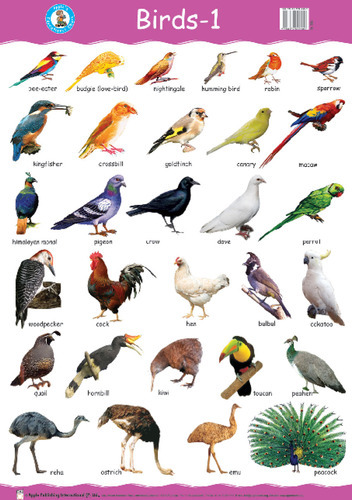 List Of Indian Birds With Names