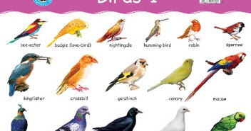Sports Money And Lifestyle Name Of Birds In Hindi With