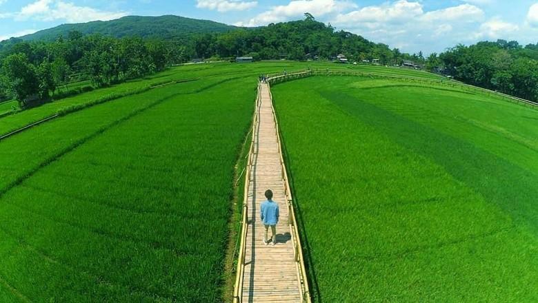 Wisata Sawah Yang Cocok untuk Ngabuburit
