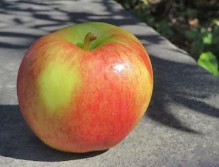 Diva apple
