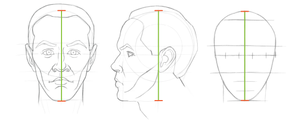 Head proportions chart: This is our first unit of measurement when placing the eyes as we draw the head.