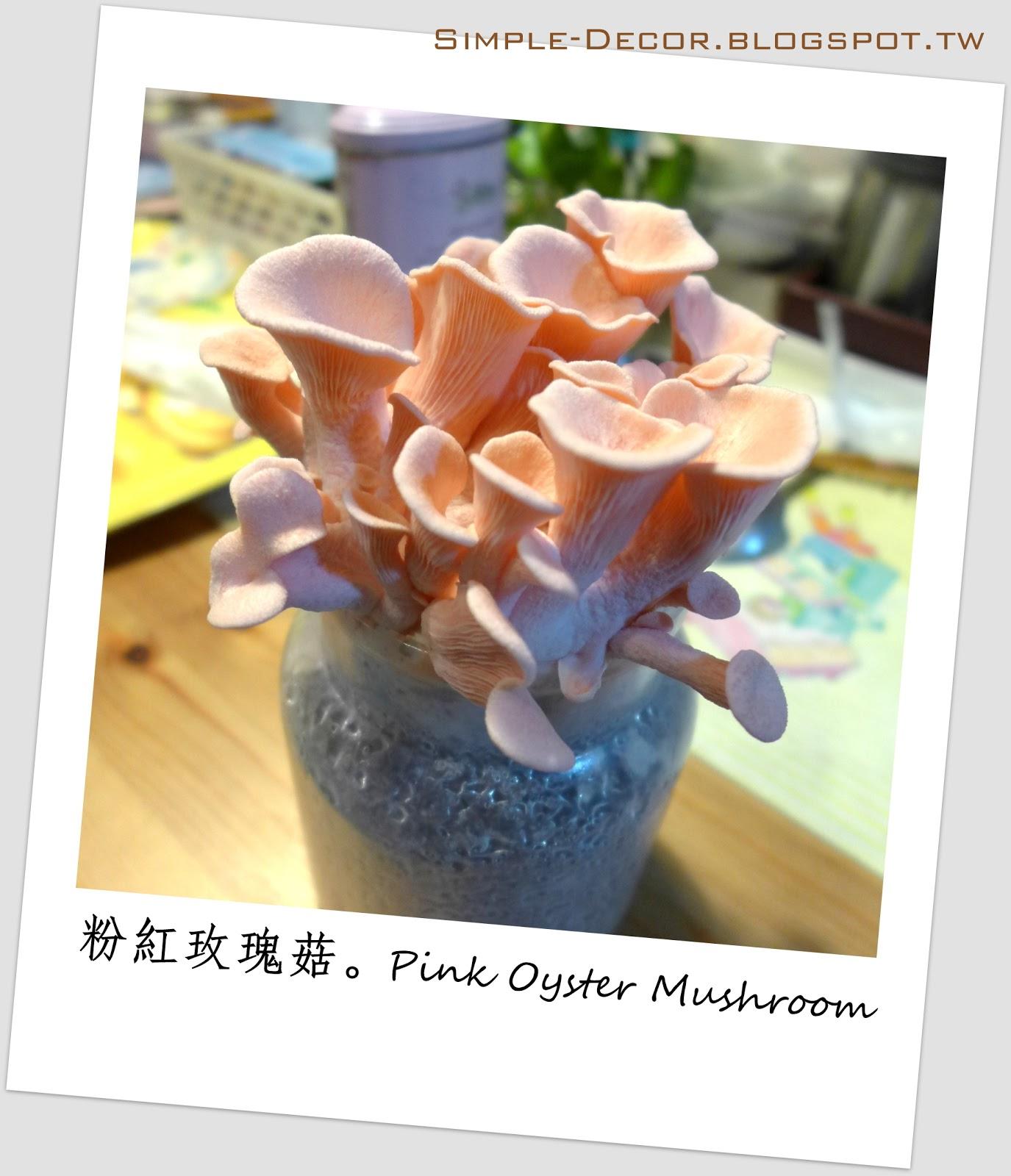 https://simple-decor.blogspot.com/2020/03/Pink-Oyster-Mushroom-DIY-growing-kit.html