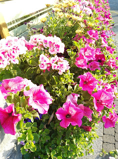 flowers at the forge, Moycullen