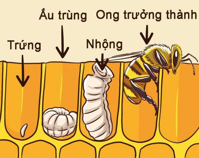 khi-phai-doi-mat-voi-kho-khan-hay-suy-nghi-nhu-mot-con-ong