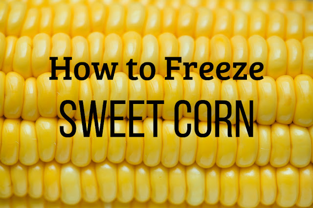 How to freeze sweet corn on the cob or kernel.