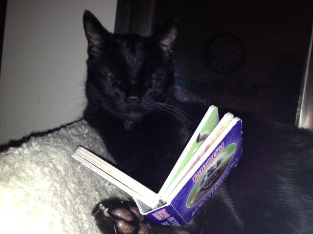 cb 99 - 10 Gatos pretos lendo livros