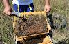 Kαταπολέμηση ξελάφρωμα της βαρρόα τώρα το Καλοκαίρι: Πως καταφέρνουμε μέγιστη αποτελεσματικότητα