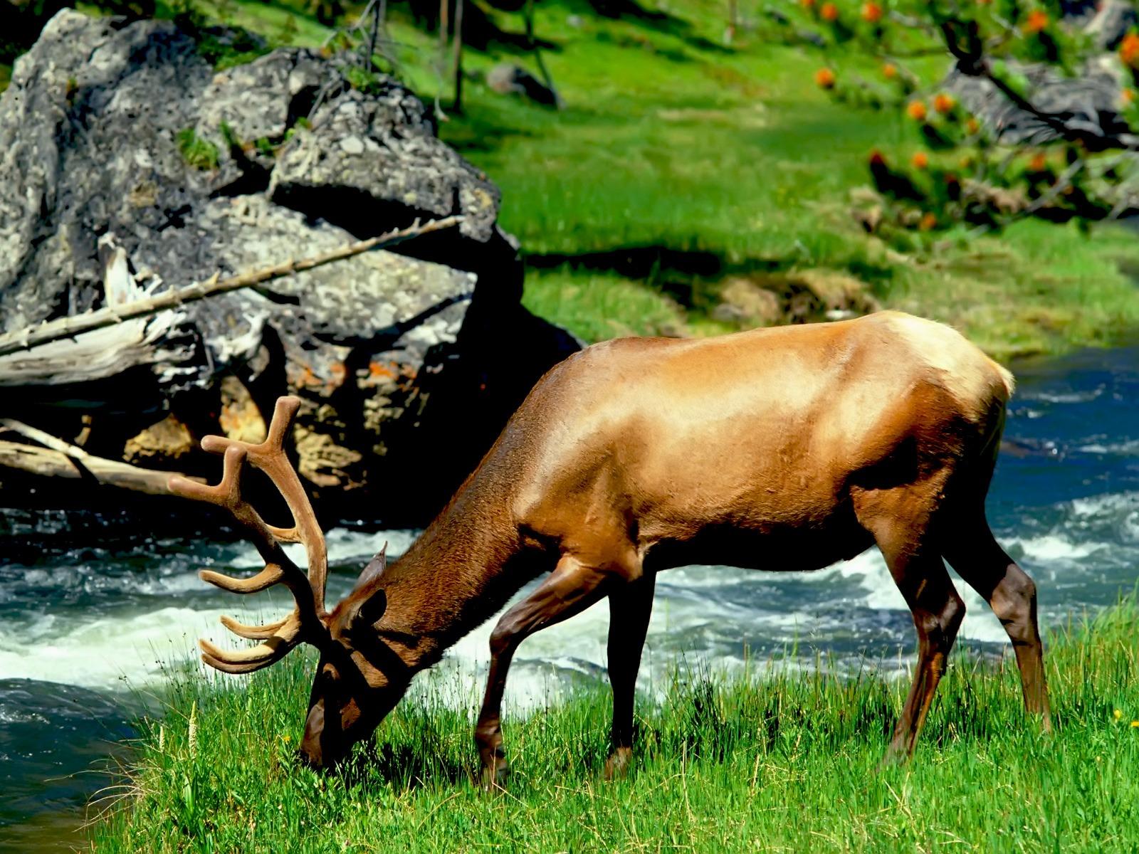 Hd Animal Wallpapers Wild Life Animal Desktop Images: Any Photo Album