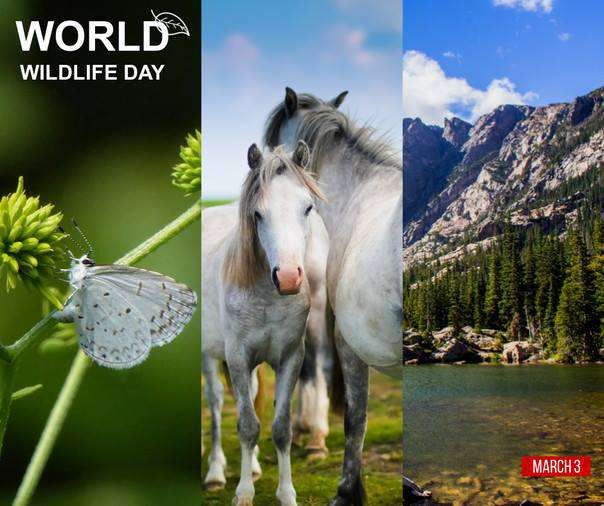 World Wildlife Day Wishes Images download