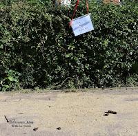Bürgersteig mit Hinterlassenschaften von Hunden