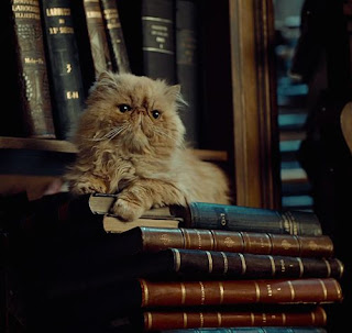 Gato de Hermione, Harry Potter cats, gatos y libros