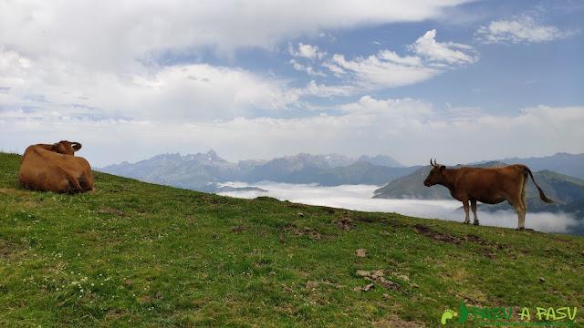 Ganado pastando en las inmediaciones del Pico Zorru, con los Picos de Europa de fondo