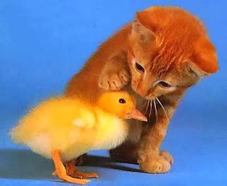 Nunca Maltrate um Animal