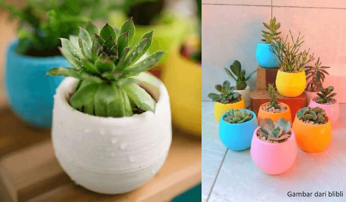 Dapatkan Promo Dari Pot Bunga Di Salah Satu Market Online