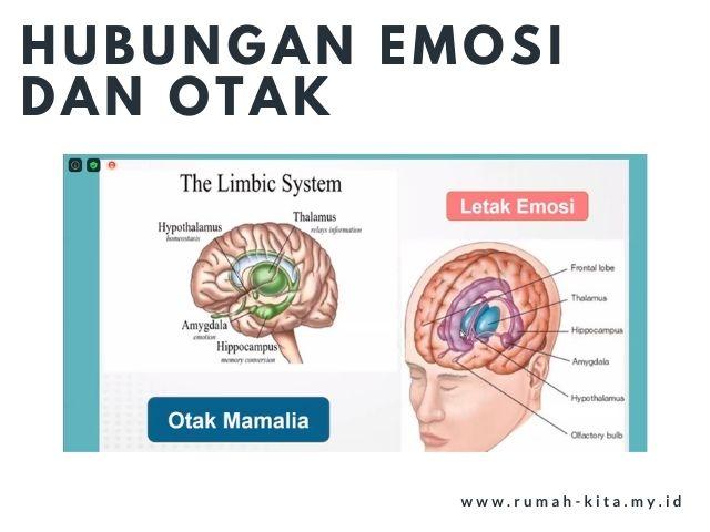 hubungan emosi dan otak